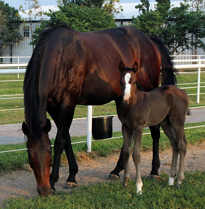 Our First Official Foaling Contest